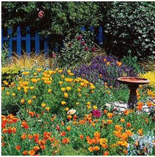 Creating a Wildlife Friendly Garden2